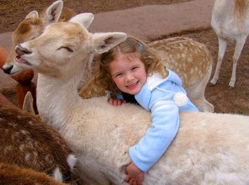 Grand Canyon Deer Farm Petting Zoo