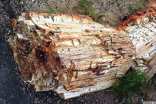 Petrified Log 2