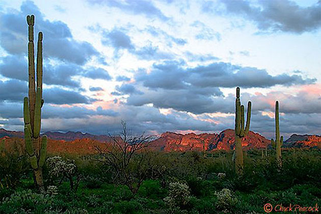 Spring in the Superstition Mountains