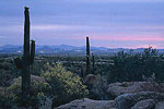 Scottsdale at Twilight