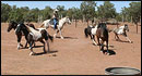 Totsonii Ranch - Canyon de Chelly Tours